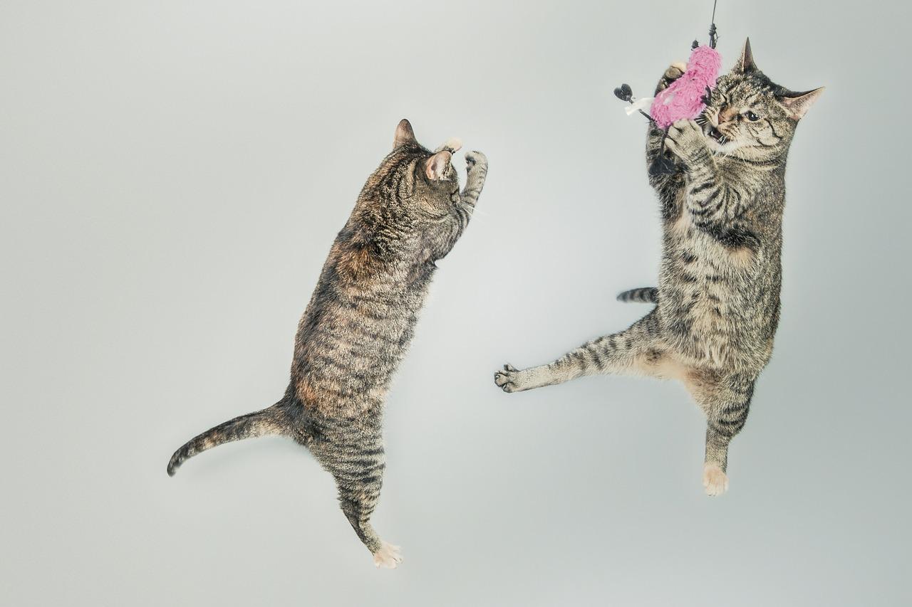 Cats Jump