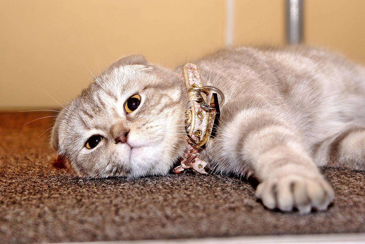 House, Cat